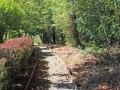 NatureTrail-3113-Woodland-R